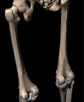 1-long-bones-femur